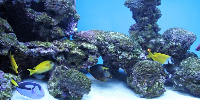 Poisson eau Vie Sous-Marine